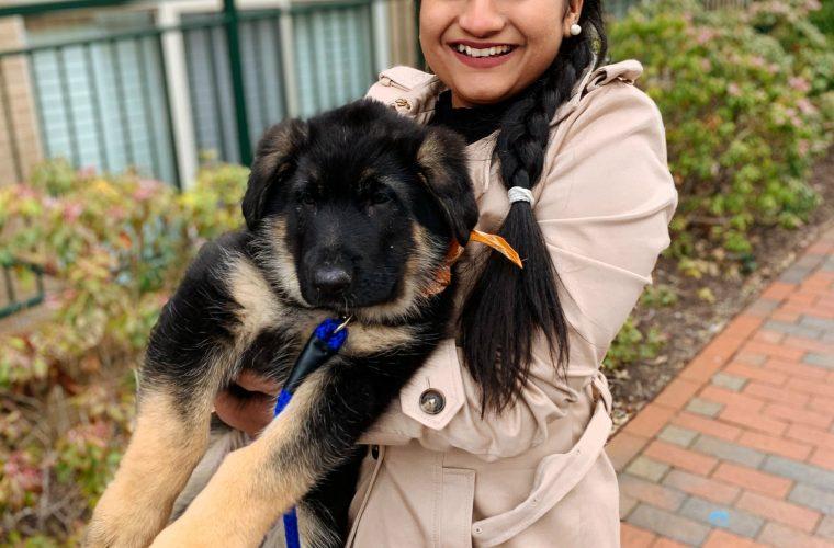 We Just Got a New German Shepard puppy