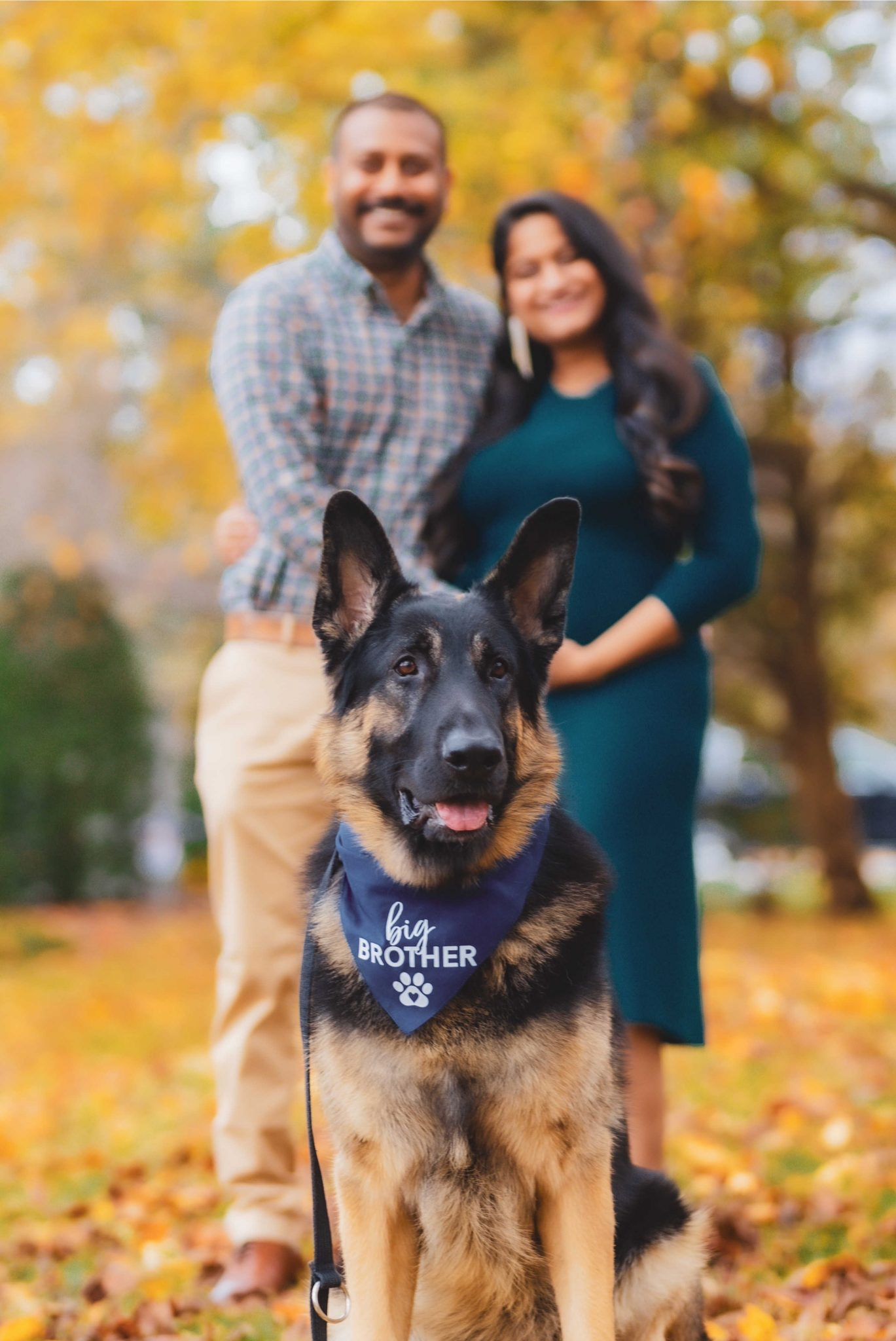 Fall Pregnancy Announcement by top Maryland life and style blogger, Dreaming Loud |Pregnancy Announcement by popular Maryland lifestyle blog, Dreaming Loud: image of a man wearing a blue and red plaid shirt and khaki pants and a pregnant woman wearing a blue maternity dress, statement earrings, and purple velvet shoes standing together behind their German Shepard dog that's wearing a 'Big Brother' bandana around his neck.